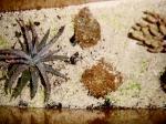 Biota Laut Biologi ITB